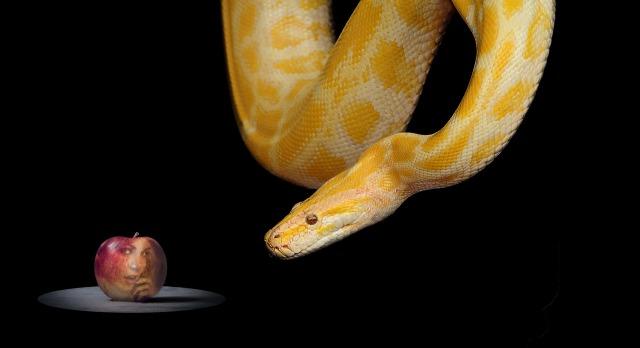 snake-1322240_1920.jpg
